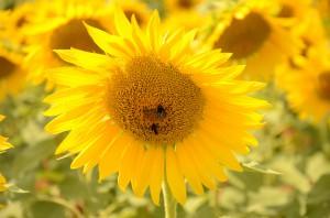 7 - bloemengroet - aangepast 30